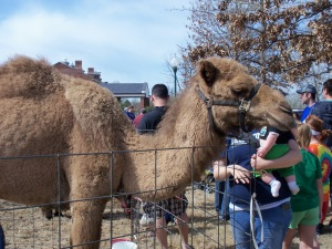 Hmm, does it look like that camel has the baby's head in his mouth??