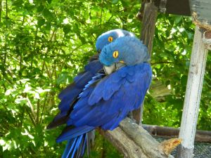 Blue birds at Wichita Zoo